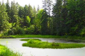 PARTNERSHIP ENHANCES ACCESS TO NEW YORK STATE'S ONLY NATIONAL FOREST