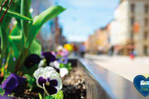 DOWNTOWN ITHACA OFFERS PROGRAMS AND GUIDES