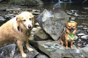Dog-Friendly Hikes in the Finger Lakes Region