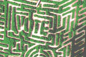 "Explore the ""Cast Your Vote"" Corn Maze"