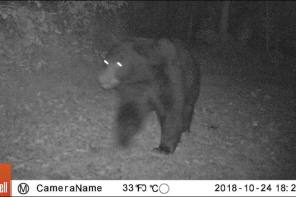 Update on Returning Wildlife