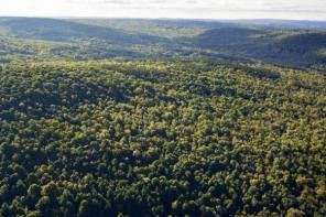 Connecticut Hill Wildlife Management Area Expands in Size