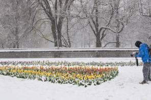 Spring Snowstorm Reveals Nature's Artistic Talents