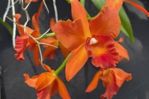 Canandaigua's Sonnenberg Gardens Will Delight You