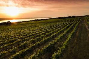 Finger Lakes Wine Alliance announces Finger Lakes Wine Month Reboot