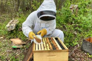 Pollen-sized technology protects bees from deadly insecticides