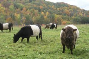 Enjoy the 2nd Annual Farm Trail in Schuyler County
